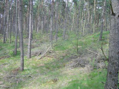 Medium property photo - Heldense bossen, 5988 NH Helden