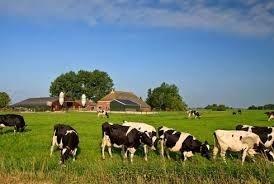 Te koop: Te koop gevraagd melkveebedrijf in omgeving Zwolle