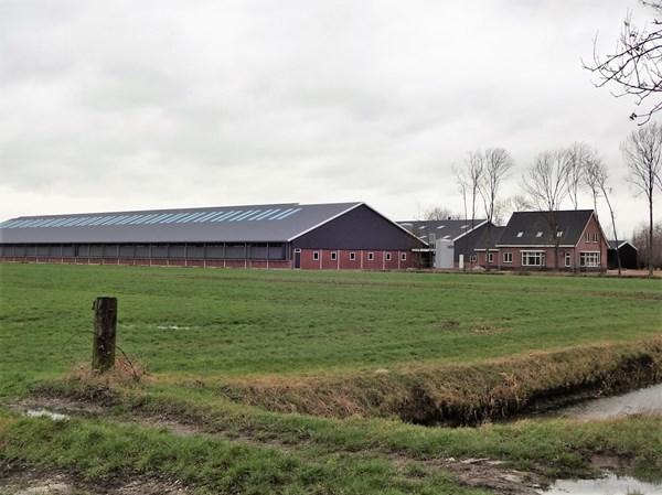 Te koop: Nieuw gebouwd geitenbedrijf met woning geschikt voor circa 1.500 melkgeiten en 1.000 opfokgeiten. De totale perceeloppervlakte bedraagt ruim 2 ha.